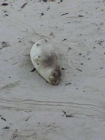 We Love Tourists: Happy seal, napping in the sun