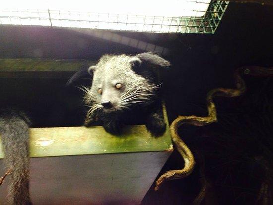 Drusillas Park: bearcat