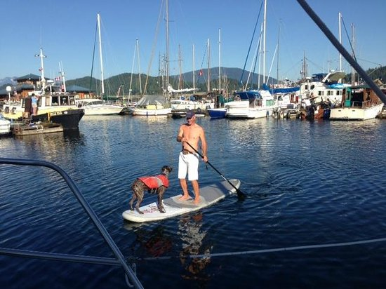 Sunshine Kayaking: Paddle Board in Gibsons Harbour