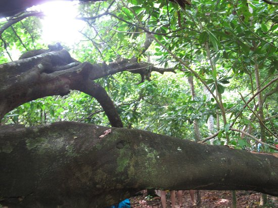 Phuket Tours Direct - Day Tours: Lost Forest