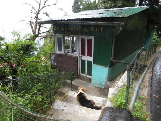 "Hot Stimulating Cafe: Exterior and ""guard"" dog"
