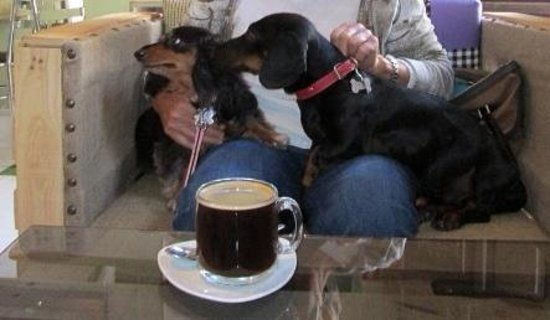 El Cafe de la Mancha : pet friendly