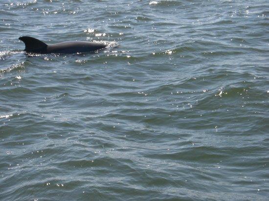 Mary McLeod Bethune Beach Park: dolphin at play