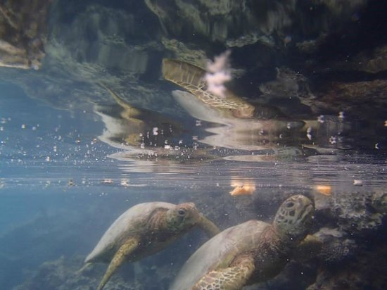 Island Time Kayaking Tours - Day Tours: Feeding Turtles #IslandTimeKayakingTours