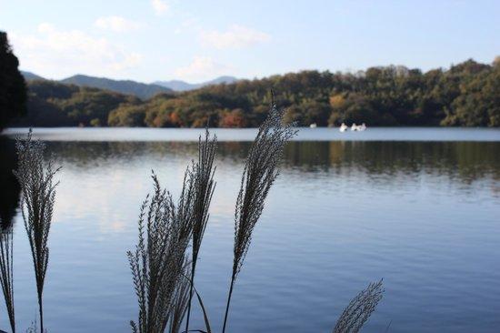 Ippekiko Lake: viw5