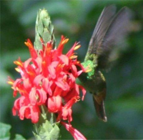 Cabinas Sax's Caribe : jardin