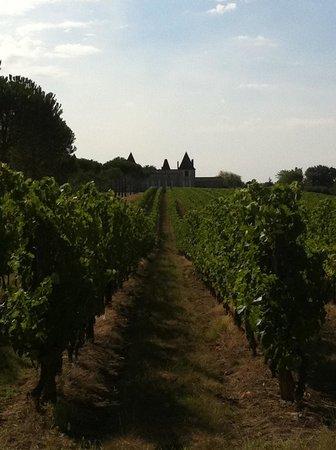 Château de Mazelières : Vineyard over look the Chateau.