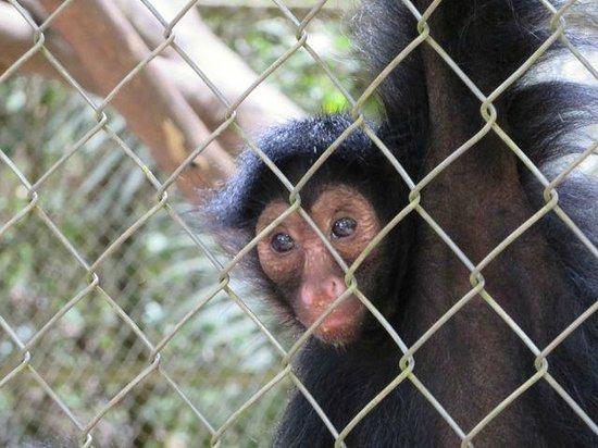 ZooFIT - Zoologico de Santarem: Black faced monkey