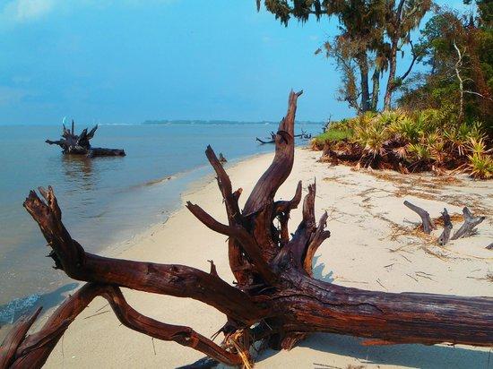 Driftwood Beach: Driftwood at hightide