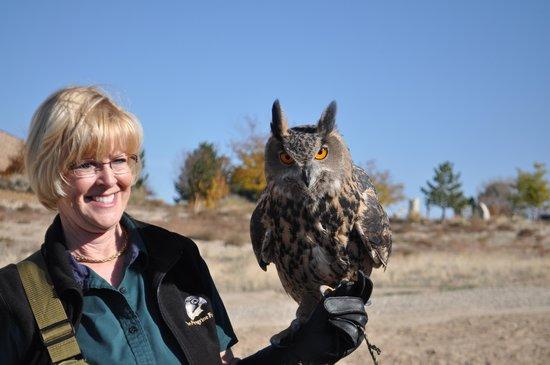 World Center For Birds of Prey: Wally the owl