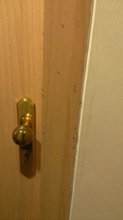 Hotel Transit: Ants on the room door