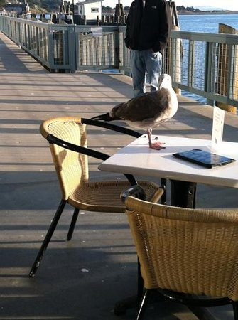 The Tides Wharf Restaurant: Sammy Seagull waiting to order.