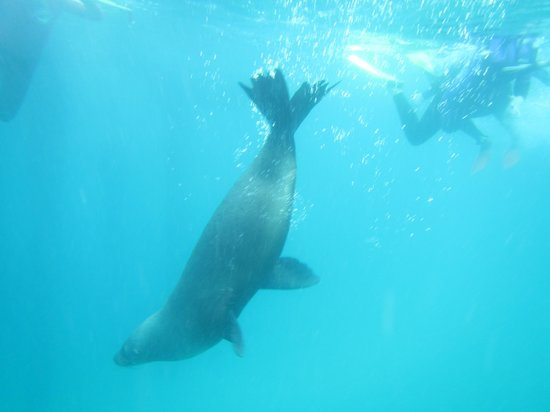 Sea All Dolphin Swims: Nosey parker