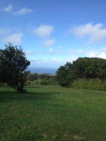 Big Island Eco Adventures II Zipline Canopy Tour: look at that view!