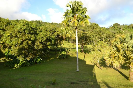 le jardin verdoyant picture of le jardin malanga trois rivieres tripadvisor On jardin 3 rivieres