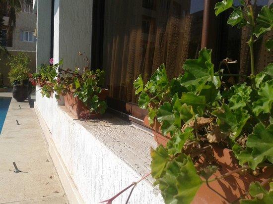 New Farah Hotel: Dead Geraniums in crumbling pots