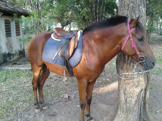 The Happy Ranch Horse Farm : Popeye having a wee break at temple