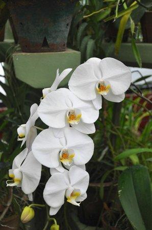 "Royal Botanical Gardens: ""Orchid Collection, 2"", Peradeniya, Sri-Lanka, 2013-09-05"