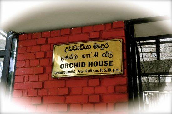 """Royal Botanical Gardens: """"Orchid House"""", Peradeniya, Sri-Lankda, 2013-09-05"""