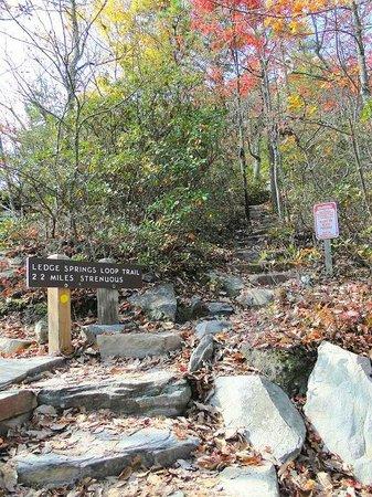 Pilot Mountain State Park: strenuous 2.2 mile ledge loop trail
