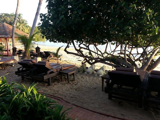 Zazen Boutique Resort & Spa: View from the beachfront room