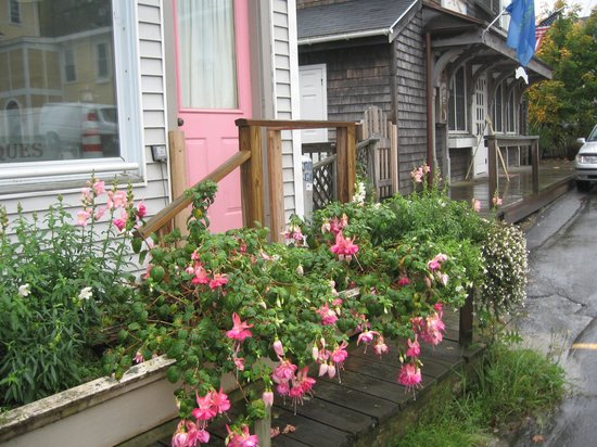 Inn on the Harbor: Flowers hanging on as long as they can in October in Maine