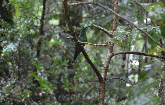 Desafio Monteverde Tours -  Day Tours: Hummingbird @ Monteverde Cloud Forrest
