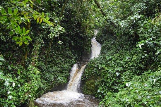 Desafio Monteverde Tours -  Day Tours: Waterfalls Monteverde Cloud forrest