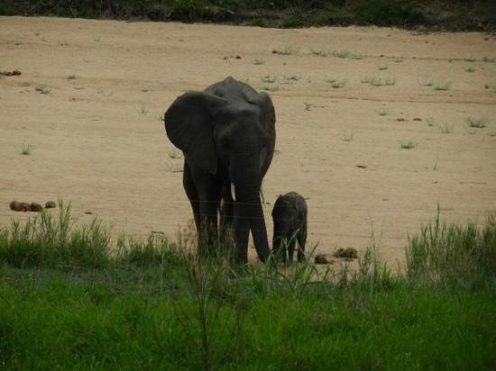 andBeyond Ngala Tented Camp: elephants right in front of tent 8