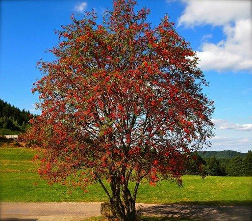 Rocher de Dabo : Dabo in Autumn