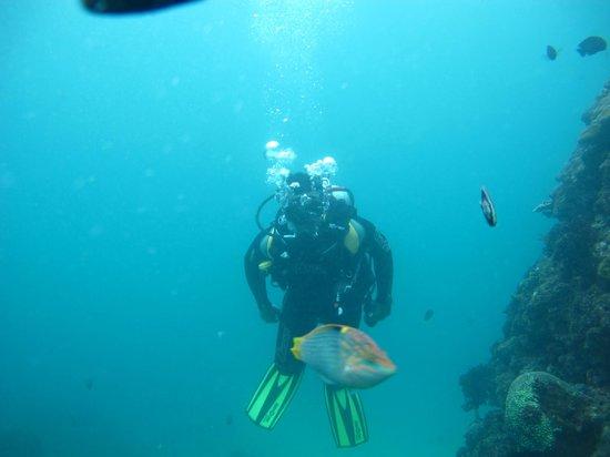 Bali Scuba Masters: The Kingdom of tropical fish