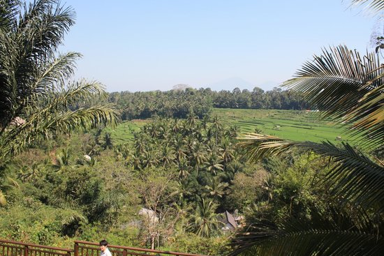 The Samaya Bali Ubud: breakfast view