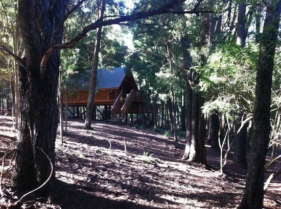 Treehouse Forest Lodge : Lovely forest setting for the cabins