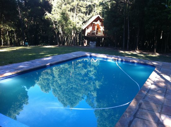 Treehouse Forest Lodge: Our kids loved the pool!