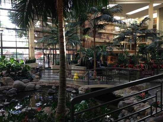 Embassy Suites by Hilton Hotel Phoenix Biltmore: Welcome to the jungle