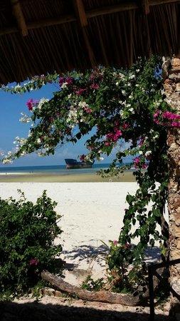 Kunduchi Beach Hotel And Resort: desolate ship beyond heaps of bouganvillea