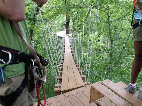 First Line Picture Of Zipzone Outdoor Adventures