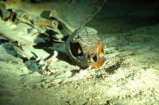Sipadan Kapalai Dive Resort: Cueva de las tortugas