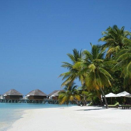 Vakarufalhi Island Resort: la bellissima spiaggia corallina (mai calda!!)