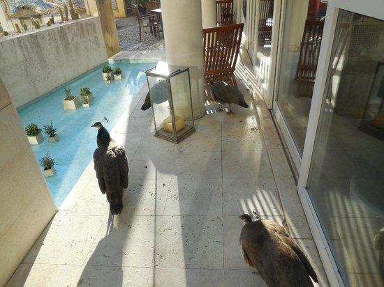 Solar Do Castelo: Peacocks in the courtyard