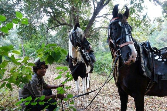 Krishna Ranch: A few breaks each day