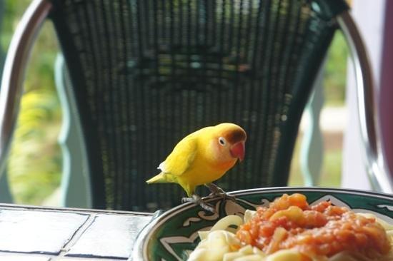 Tendacayou Ecolodge & Spa : Visite de la perruche