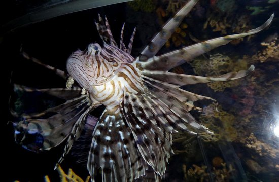 Ripley's Aquarium Of Canada: pretty