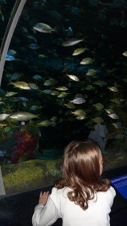 Ripley's Aquarium Of Canada: lots of fish