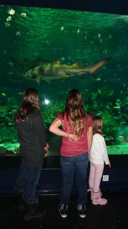 Ripley's Aquarium Of Canada: watching fish
