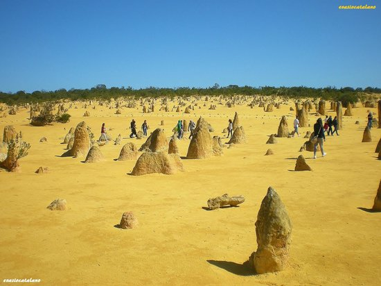 The Pinnacles : Pinnacles Desert 1