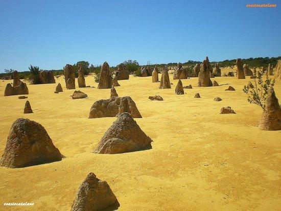 The Pinnacles : Pinnacles Desert 2
