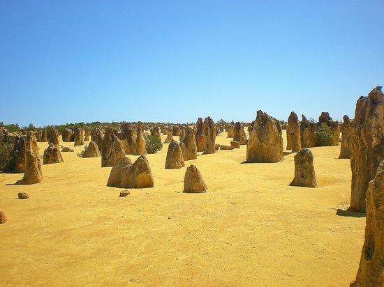 The Pinnacles : Pinnacles Desert 3