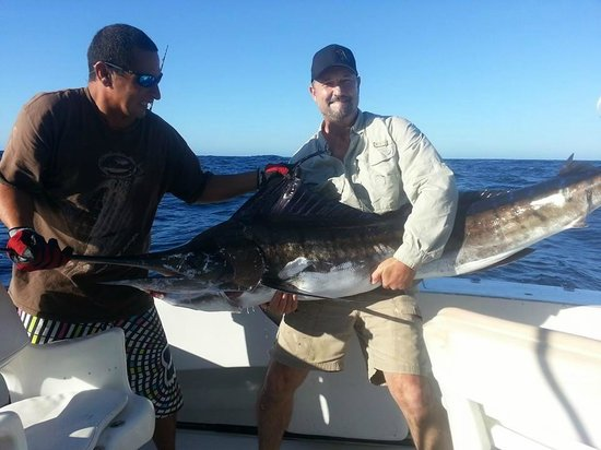 Marlin Picture Of Cabo Fishing Charters Cabo San Lucas