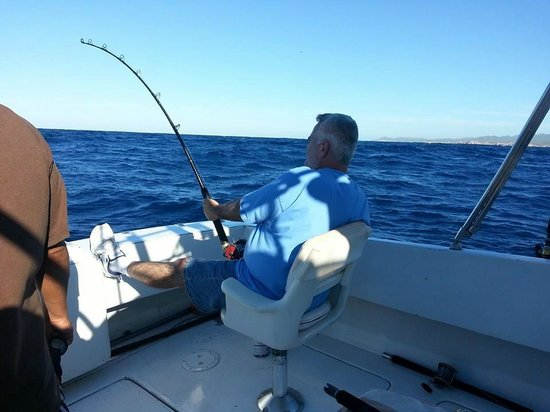Marlin picture of cabo fishing charters cabo san lucas for Cabo san lucas fishing charters
